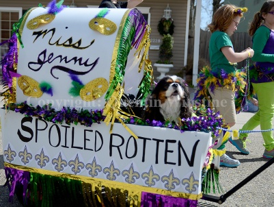 A dog rides in a decorated cart during the Krewe de Paws parade in Olde Towne Slidell on Saturday, February 22, 2014.