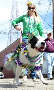 A dog and its owner march in the Krewe de Paws parade in Olde Towne Slidell on Saturday, February 22, 2014.