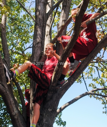 Quentin Winstine Two young Arkansas Razorback fans climb a tree to get a better view of the Hog Walk before the game against the Toledo Rockets at War Memorial Stadium in Little Rock on Saturday, September 12, 2015.
